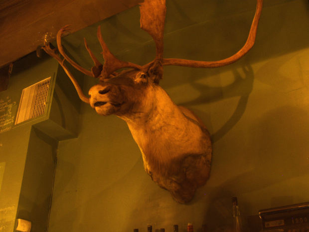 A stag mounted on a wall. Photo: Michael Connors