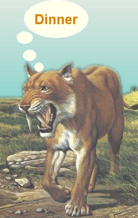 Sabre toothed tiger, hungrily thinking about dinner